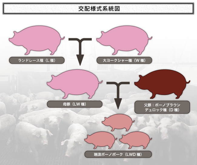 交配様式系統図